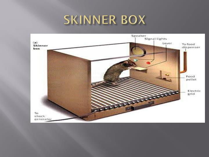 skinner box Some time ago, a psychologist that went by the name of burrhus frederic skinner decided to put a mouse inside of a box this box contained a lever which the mouse could press to open a closed compartment, revealing food.