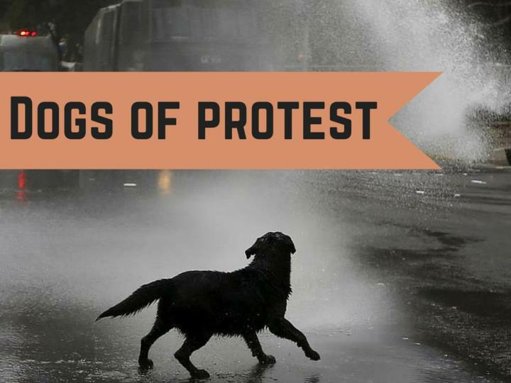 dogs of protest n.