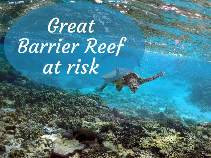 great barrier reef at risk n.