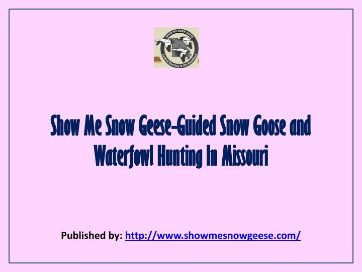 show me snow geese guided snow goose and waterfowl hunting in missouri n.