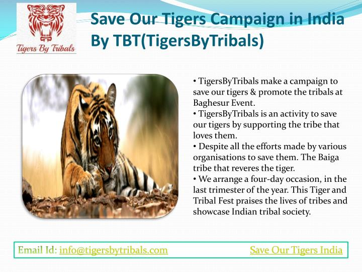 essay on save indian tigers Tigers are thriving in and around india's nagarhole the fight to save the tiger he gives them hope that they can save their own tigers and other big.