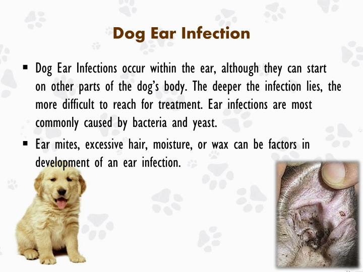 dog ear infection symptoms - 720×540