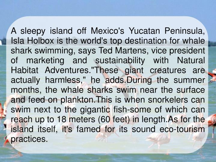 """A sleepy island off Mexico's Yucatan Peninsula, Isla Holbox is the world's top destination for whale shark swimming, says Ted Martens, vice president of marketing and sustainability with Natural Habitat Adventures.""""These giant creatures are actually harmless,"""" he adds.During the summer months, the whale sharks swim near the surface and feed on plankton.This is when snorkelers can swim next to the gigantic fish-some of which can reach up to 18 meters (60 feet) in length.As for the island itself, it's famed for its sound eco-tourism practices."""