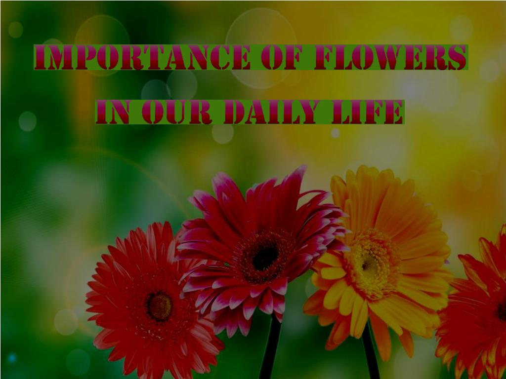 importance of flowers in our life
