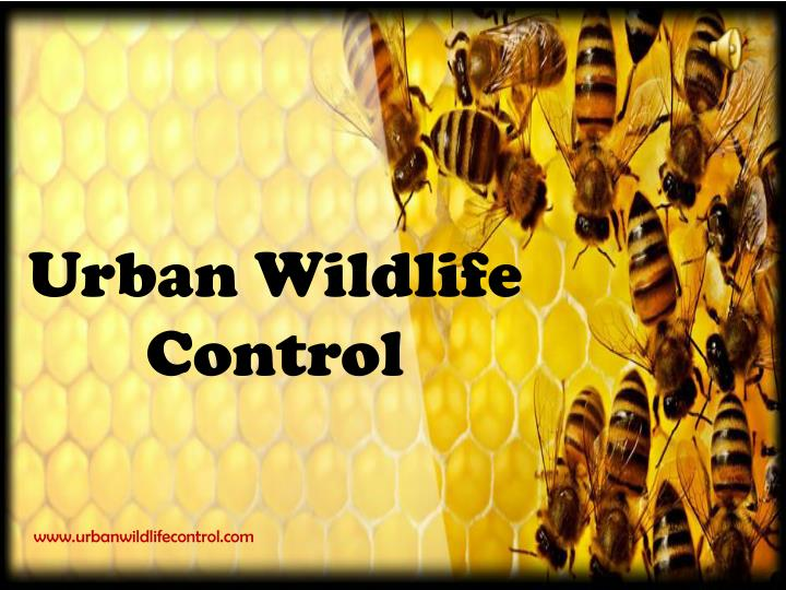 urban wildlife control n.