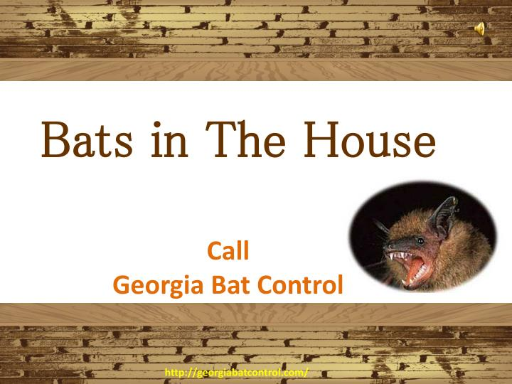 bats in the house n.