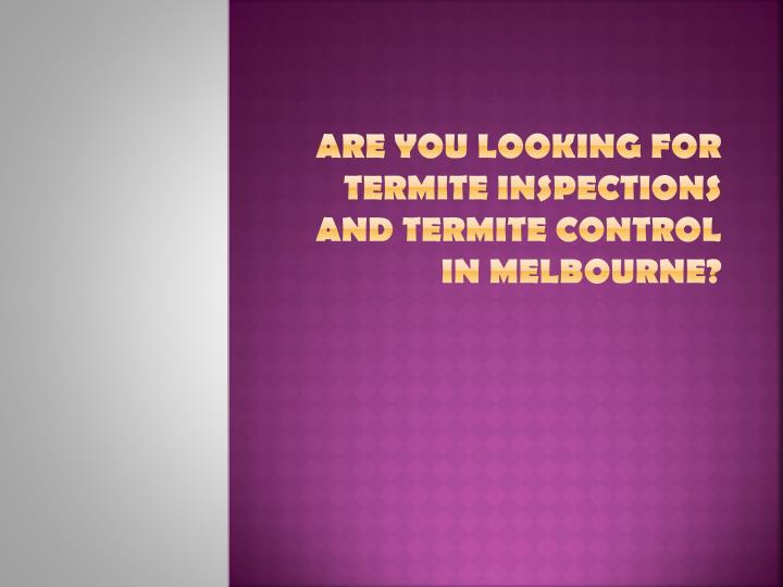 are you looking for termite inspections and termite control in melbourne n.