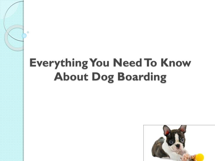 everything you need to know about dog boarding n.