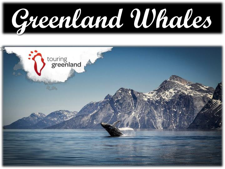 greenland whales n.