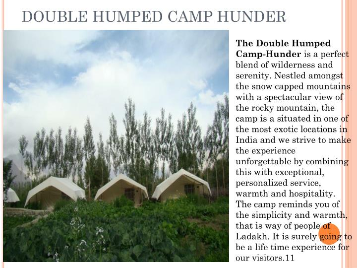 double humped camp hunder n.