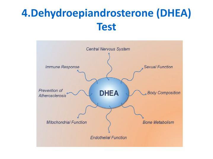 4.Dehydroepiandrosterone (DHEA) Test