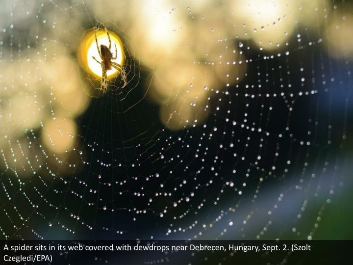 A spider sits in its web covered with dewdrops near Debrecen, Hungary, Sept. 2. (Szolt Czegledi/EPA)
