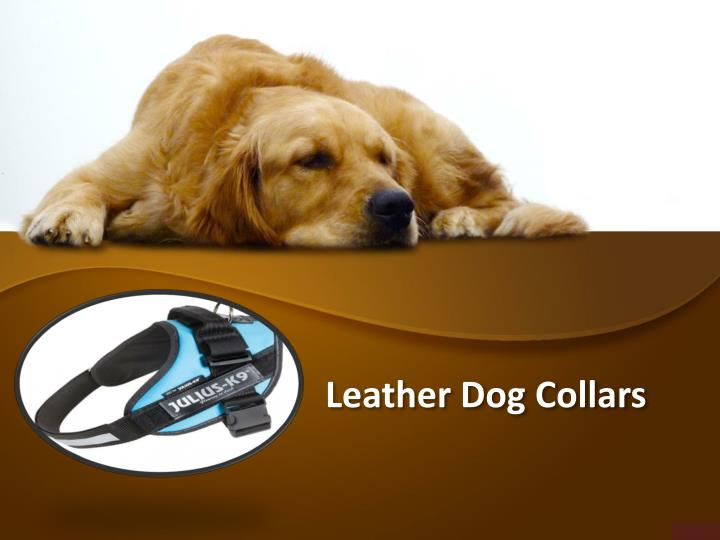 leather dog collars n.