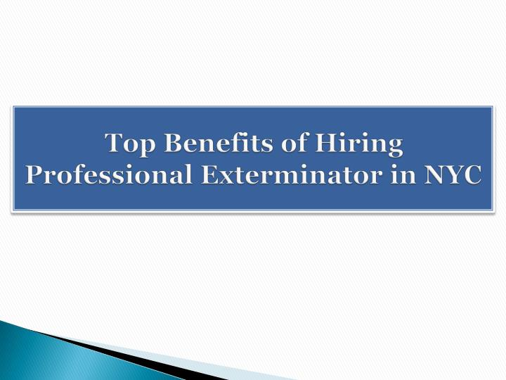 top benefits of hiring professional exterminator in nyc n.