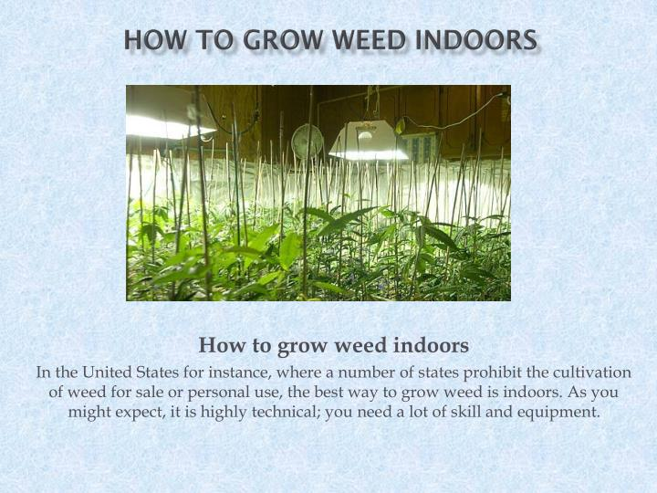 how to grow weed indoors n.