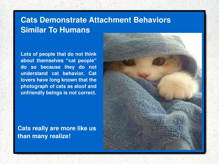 Cats Demonstrate Attachment Behaviors Similar To Humans