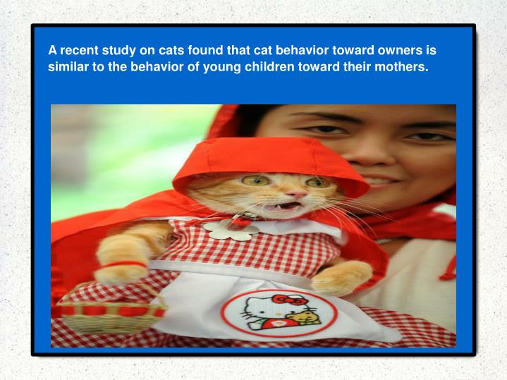 A recent study on cats found that cat behavior toward owners is similar to the behavior of young children toward their mothers.