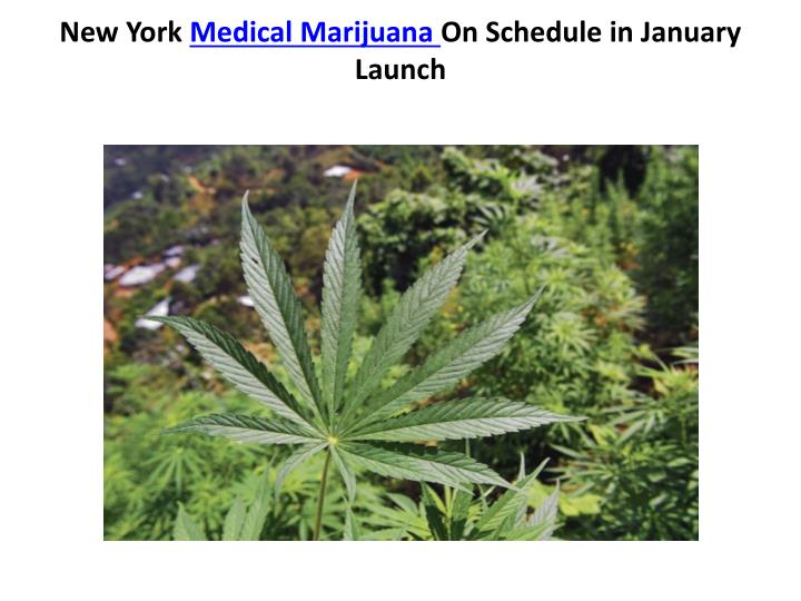 new york medical marijuana on schedule in january launch n.