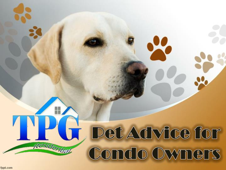 pet advice for condo owners n.