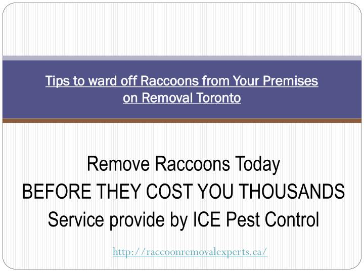 tips to ward off raccoons from your premises on removal toronto n.