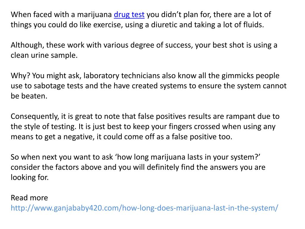 PPT - How long does marijuana last in the system PowerPoint