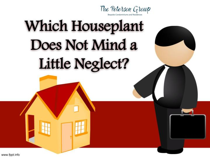which houseplant does not mind a little neglect n.