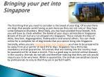 bringing your pet into singapore