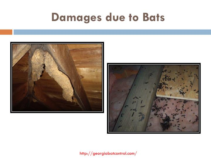 Damages due to bats