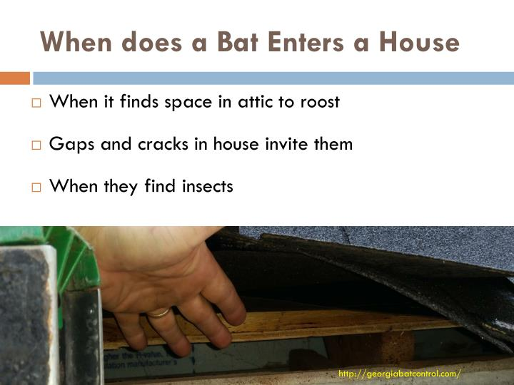 When does a bat enters a house