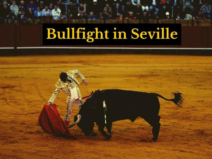 bullfight in seville n.