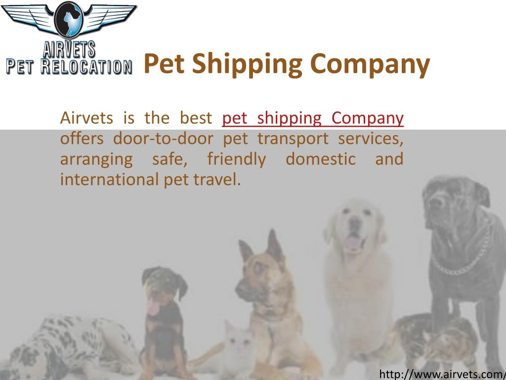 PPT - Pet Relocation PowerPoint Presentation - ID:7335859