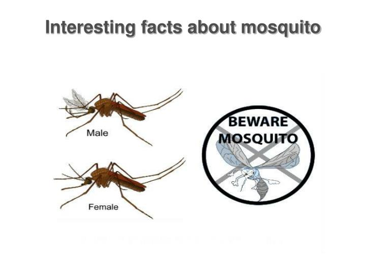 interesting facts about mosquito n.