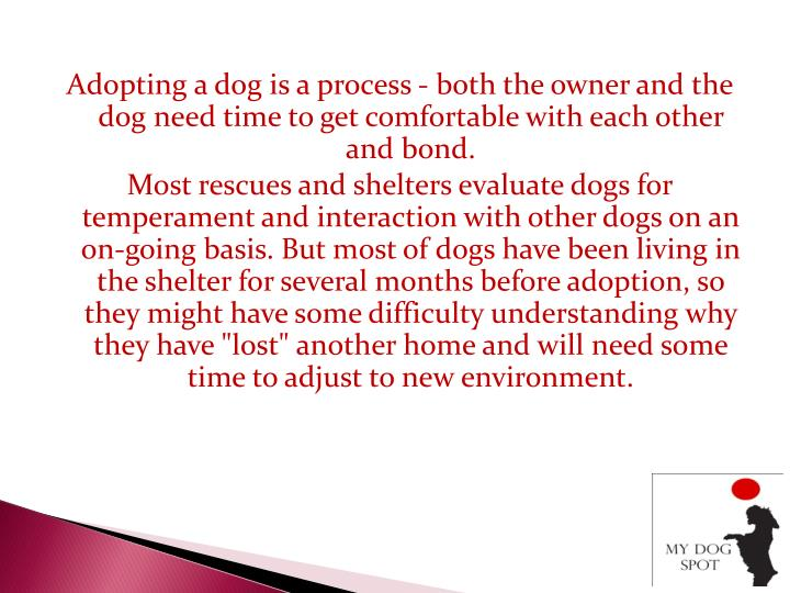 ppt tips for adopting a new puppy powerpoint presentation id 7346755. Black Bedroom Furniture Sets. Home Design Ideas