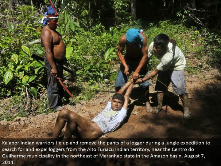 Ka'apor Indian warriors tie up and evacuate the jeans of a lumberjack amid a wilderness endeavor to hunt down and oust lumberjacks from the Alto Turiacu Indian domain, close to the Centro do Guilherme district in the upper east of Maranhao state in the Amazon bowl, August 7, 2014.