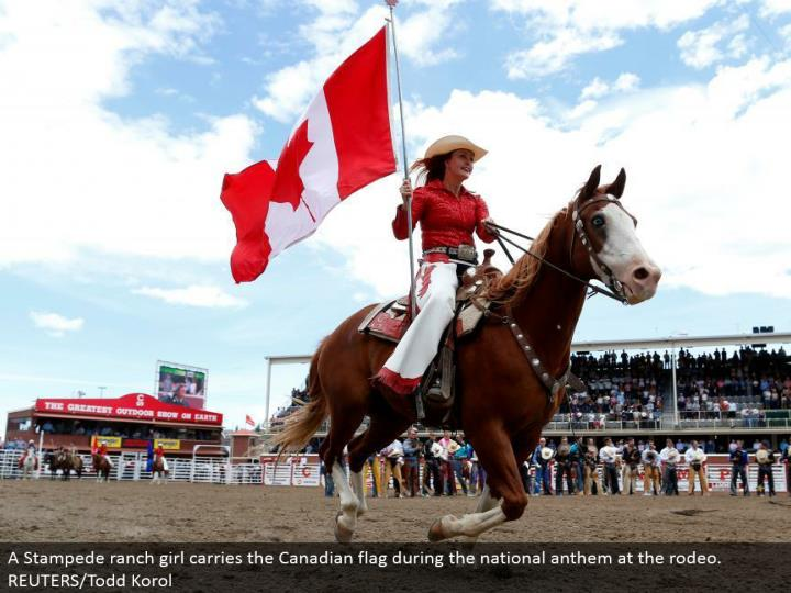 Ppt Calgary Stampede Powerpoint Presentation Id 7366670