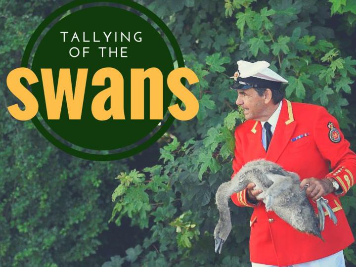 tallying of the swans n.