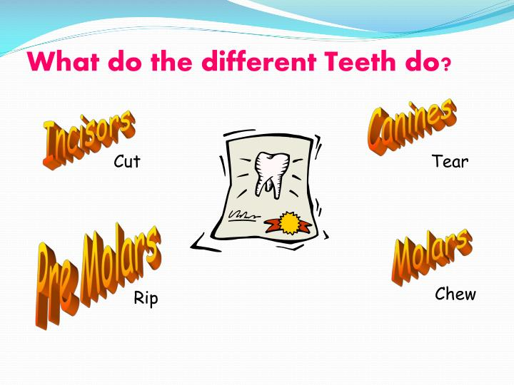 What do the different Teeth do?