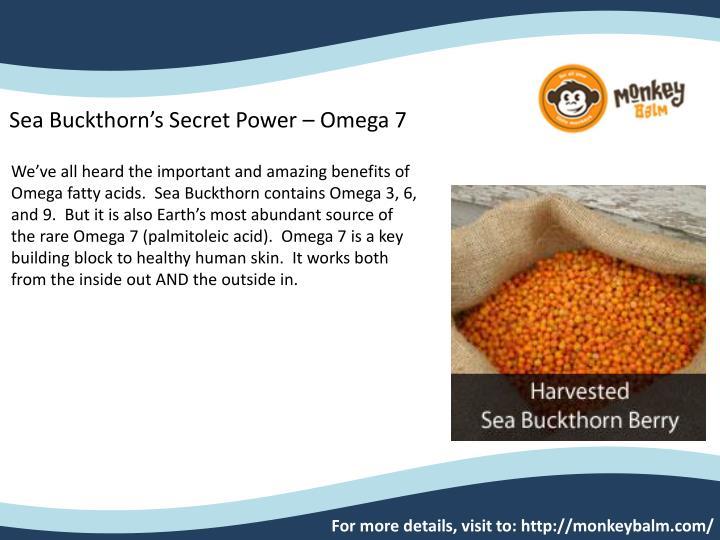 Sea Buckthorn's Secret Power – Omega 7