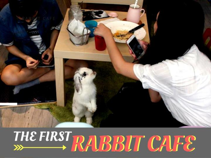 the principal rabbit cafe n.