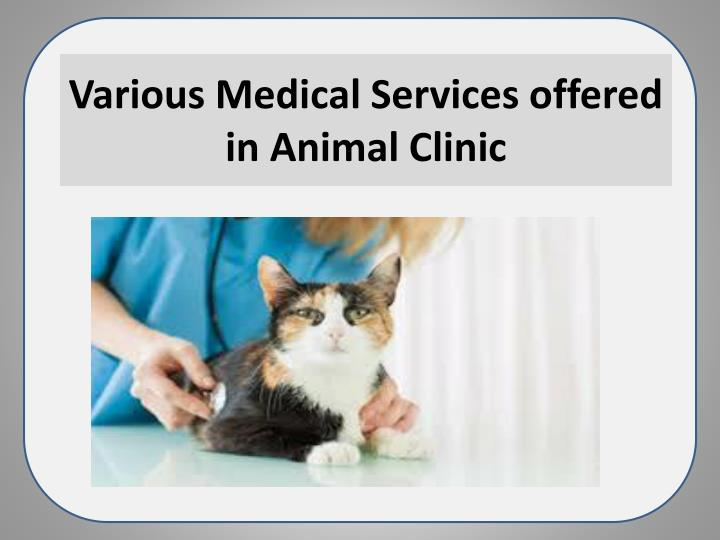 various medical services offered in animal clinic n.