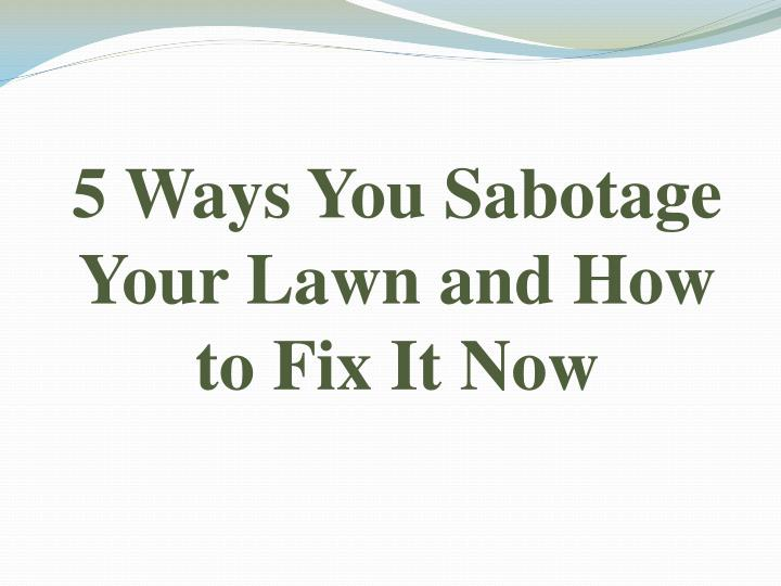 5 ways you sabotage your lawn and how to fix it now n.
