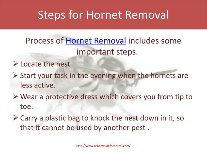 Steps for Hornet Removal