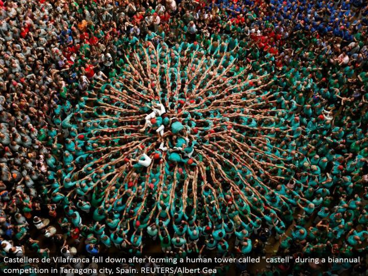 """Castellers de Vilafranca tumble down subsequent to shaping a human tower called """"castell"""" amid a half-yearly rivalry in Tarragona city, Spain. REUTERS/Albert Gea"""