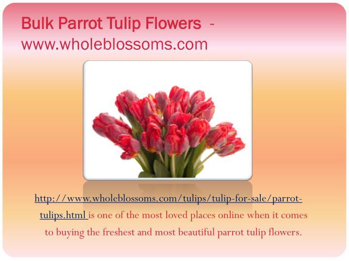 Bulk Parrot Tulip Flowers