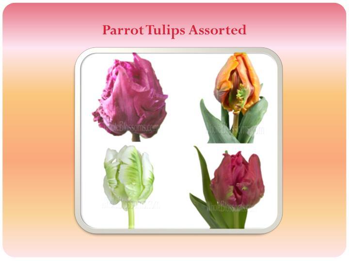 Parrot Tulips Assorted