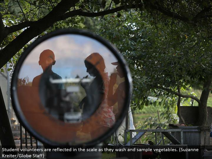 Student volunteers are reflected in the scale as they wash and test vegetables. (Suzanne Kreiter/Globe Staff)