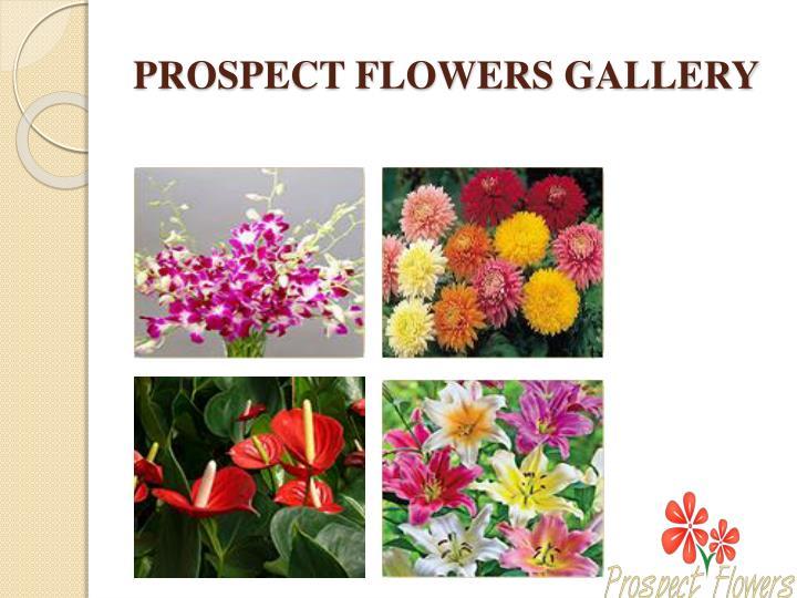 PROSPECT FLOWERS GALLERY