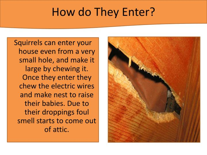 How do they enter