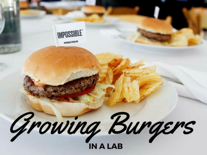 developing burgers in a lab