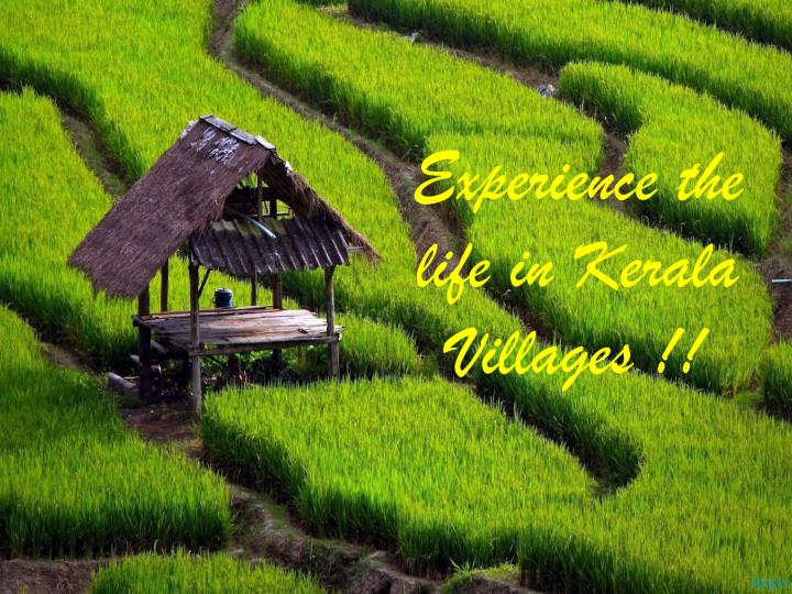 Experience the life in Kerala Villages !!